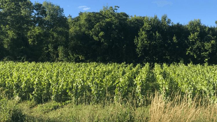 terrains à Commune de Savigny-lès-Beaune
